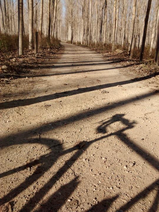 Girona Gravel Ride bosque JoanSegidor