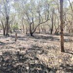 Endura one million tree JoanSeguidor